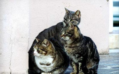 Convivir con gatos ferales